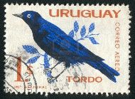 stamp printed by Uruguay, shows Great Kiskadee