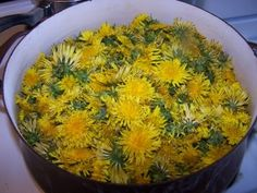 We are in the process of making dandelion wine!the wine is made, it just needs to ferment some more before we cork it . Dandelion Wine, Homemade Wine, Wine Drinks, Beverages, Survival Food, Wine Making, Home Brewing, Herbal Remedies, Yummy Drinks