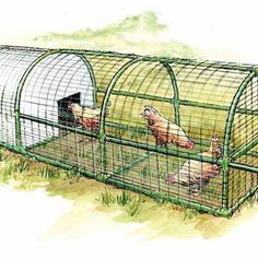 Build This Predator-Proof, Portable Chicken Coop for Your Backyard