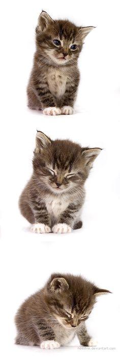 ✿ڿڰۣ(̆̃̃❤Aussiegirl #Cats