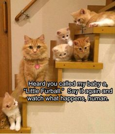 Kittens   Stairs   Funny Animal Pictures