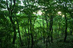 서귀포 자연 휴양림