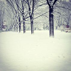 @garveyryan Breaking News: The green lane commons has been re-named to white lane commons. #vfcc #snow #winter