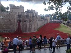 WWI poppy fields at Tower of London