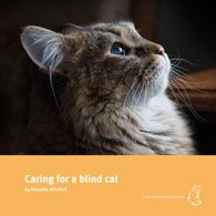 Caring for a Blind Cat - Smokey blue eyes