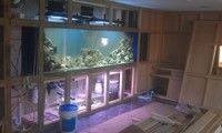 Bespoke Marine Aquariums at Aquarist Classifieds