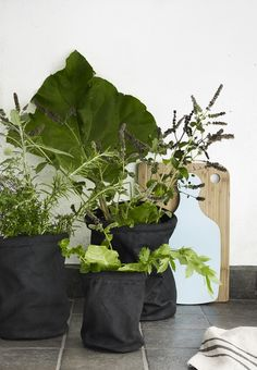 Are you interested in our black canvas plant pots? With our canvas planters for garden conservatory you need look no further.