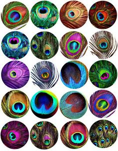 peacock feather patterns clip art collage sheet 2 inch circles