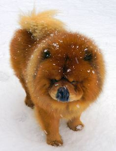 Okay, so we're in love with Martha Stewart's Chow Chow.