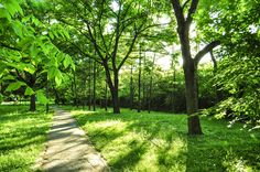 greenalicious by Marius Fechete on Sidewalk, Photography, Photograph, Side Walkway, Fotografie, Walkway, Photoshoot, Walkways, Fotografia