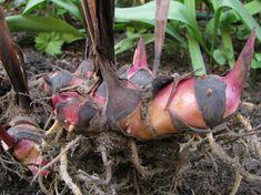 Eggplant, Vegetables, Eggplants, Vegetable Recipes, Veggies