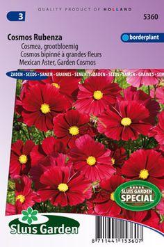 Cosmos bipinné à grandes fleurs Rubenza (Fleuroselect Novelty)