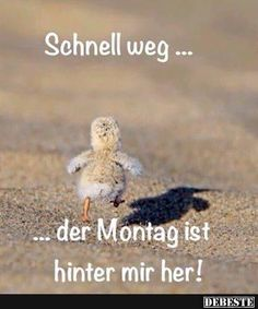 Cute poster by Moira. Cute Baby Animals, Animals And Pets, Funny Animals, Beautiful Birds, Animals Beautiful, Animal Pictures, Funny Pictures, Adorable Pictures, Amor Animal