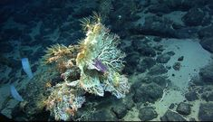 Balanus Seamount