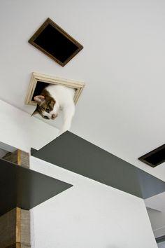 デザイナー:中西 宗平「猫と共存する家」