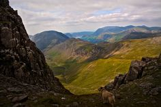 The view from near Windy Gap (on the side of Great Gable) Cumbria, The Lake District, UK - My dog Ted in the foreground