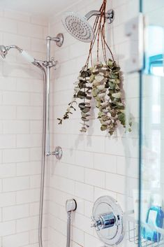 Shower Plant, Eucalyptus Shower, Hanging Herbs, Bathroom Pictures, Bathroom Ideas, Bathroom Goals, Boho Bathroom, Bathroom Plants, Shower Heads