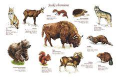TE-41 - Schutzsäugetiere Prehistoric, Lp, Flora, Education, School, Outdoor, Geography, Animaux, Lawn And Garden