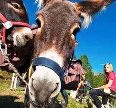 Da $124 >> Trekking con gli asini durante la Fioritura a Castelluccio di Norcia!