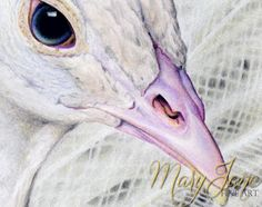 'White Peacock' - Close up of a Colored Pencil Drawing by MaryJane Sky of www.maryjanefineart.com
