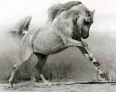 Картинки по запросу лошадь фото черно белое