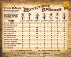 Pros & cons for each honeybee breeds' traits. This is a fair, very generalized representation of their trait potentials.
