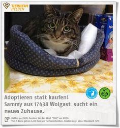 Sammy ist die Begrüßungskatze des Katzenschutzvereins Wolgast. Doch wann wird sie im eigenen Zuhause begrüßt?  http://www.tierheimhelden.de/katze/tierheim-wolgast/hauskatze/sammy/2777-1/