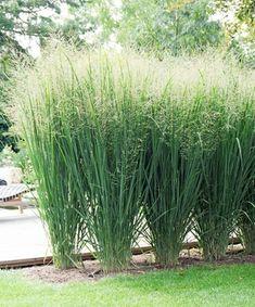 Precious Tips for Outdoor Gardens - Modern Landscaping Around Patio, Garden Landscaping, Ornamental Grasses, Flower Beds, Organic Gardening, Shrubs, Outdoor Gardens, Home And Garden, Backyard