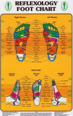Reflexology Chart (Pacific In., Foot Reflexology Chart (Pacific In., Foot Reflexology Chart (Pacific In. Massage Room, Massage Therapy, Massage Chair, Health Chart, Health Tips, Reiki, Reflexology Massage, Foot Reflexology Chart, Reflexology Treatment