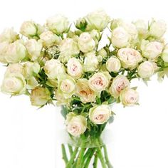 Garden Spray Rose Mimi Eden - Wedding Roses $107