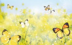 ARE you in search for different wallpapers for your desktop & wanna wallpaper that makes your day .WHAT can be better than beautiful colorful butterfly wallpapers that look amazing to … Free Flower Wallpaper, Blue Butterfly Wallpaper, Butterfly Background, Orange Wallpaper, View Wallpaper, Wallpaper Backgrounds, Wallpapers, Hd Flowers, Summer Flowers