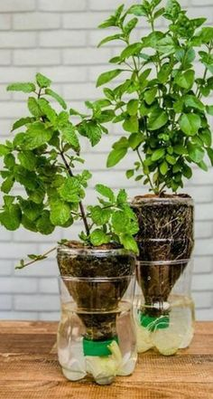 DIY Plastic Bottle Garden Projects & Ideas, A Collection of DIY Plastic Bottle Garden Projects. Recycled garden can be the cheapest and effective way to start own garden indoor, on balcony and i. Diy Gardening, Hydroponic Gardening, Hydroponics, Greenhouse Gardening, Building A Raised Garden, Raised Garden Beds, Herb Garden, Vegetable Garden, Balcony Garden