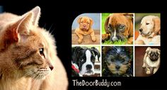 Let cats & dogs coexist with Door Buddy! #TheDoorBuddy