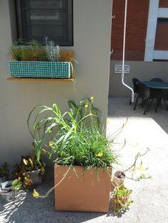 OSB, hierbas aromaticas en maceta con venecitas