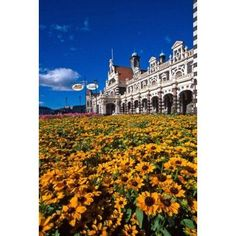Historic Railway Station and field of flowers Dunedin New Zealand Canvas Art - David Wall DanitaDelimont (18 x 24)