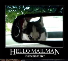 Actually not so funny. I was a mail lady and I swear I ran across this devil.