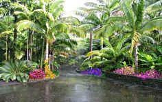 http://www.tropical-plants-flowers-and-decor.com/types-of-palm-trees.html