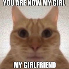 Reaction Memes Discover 7 Reasons Why Cats Are the Best Pets Memes Humor, Dankest Memes, Funny Memes, Funny Laugh, Haha Funny, Quality Memes, Wholesome Memes, Mood Pics, Stupid Memes
