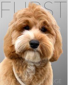 Dog Grooming Salons, Cockapoo Puppies, Luxury Spa, Photo Galleries, Gallery, Roof Rack