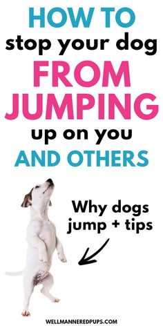How Dogs And Puppies Learn, A Guide To Dog Training – Puppy Training Puppy Training Tips, Training Your Puppy, Dog Training At Home, Puppies Tips, Dogs And Puppies, Pug Dogs, Doggies, Easiest Dogs To Train, Dog Training Techniques