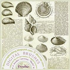 "Freebie / Бесплатно:   Photoshop Brushes ""Shells""   Набор кистей для создания коллажей, фотокниг и фотоальбомов.  8 кистей для программ..."