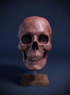 Skull, Tom Newbury on ArtStation at https://www.artstation.com/artwork/5aKg