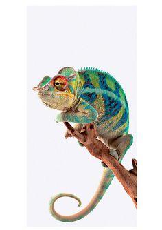 Glasbild »Ambanja Panther Chameleon«, Größe: 30/60 cm. Glasbild »Ambanja Panther Chameleon« aus der Kategorie »Tiere« . Gesamtgröße: 30/60 cm. Ein modernes Glasbild, das die Wohnung belebt! Frisch und trendig begeistert es den Betrachter. Durch die hochwertige Drucktechnik auf Float-Glas entsteht eine harmonische Verbindung zwischen Glas, Licht und Farbe. Die besonders hochwertigen Druckfarben ...