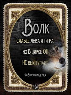 because it's weak and can not act like a cloun. Words Quotes, Bible Quotes, Wise Words, Russian Quotes, Word Board, Funny Phrases, Clever Quotes, Chalkboard Signs, Man Humor