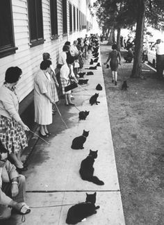 Black Cat Auditions in Hollywood, by Ralph Crane (1961)