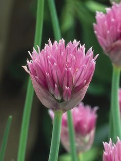 These pretty flowers and plants grow naturally in dry environments.