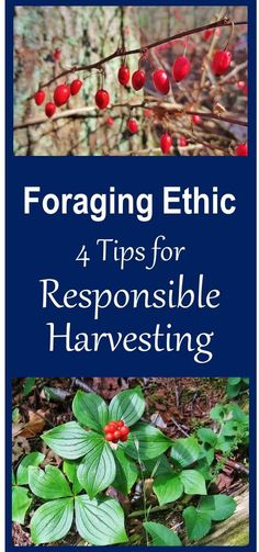Foraging used to be an essential life skill. It was nearly forgotten for generations. Its comeback within a more crowded world requires awareness of its impact, in order to do it sustainably. Foraging Ethic encourages responsible behavior that reduces the forager's impact on nature, and explains why this is so important.