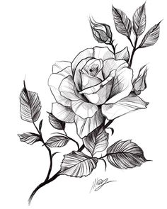 Rose Drawing Tattoo, Flower Art Drawing, Flower Sketches, Tattoo Sketches, Tattoo Drawings, Rose Tattoos, Flower Tattoos, Small Tattoos, Arm Tattoo