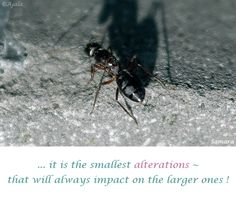 ... it is the smallest #alterations ~ that will always impact on the larger ones ! ( #Samara )
