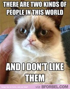 LOL Grumpy Cat gets me every time…